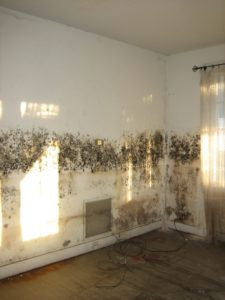 Identifying mold problems in your home.